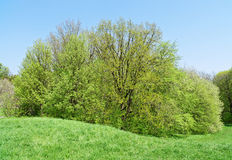Big deciduous tree on meadow Stock Photo