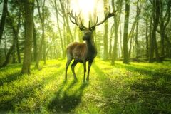 Free Big Deer Stands In A Bright Green Forest Stock Image - 182032741