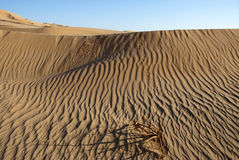 The big desert. In Oman rn Royalty Free Stock Photo