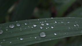 Big dew drops stock video