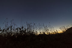Big dipper. During sunset with grass silhouette stock images