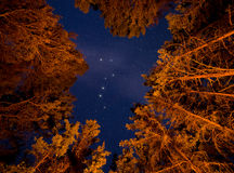 Big Dipper Visible Through Orange Lit Trees. Orange lit trees with stars an big dipper royalty free stock images