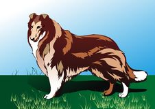 Big dog. Dog on green herb Royalty Free Stock Photography