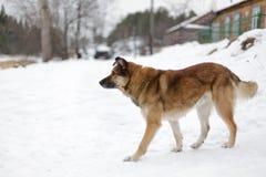 Big dog Stock Photo