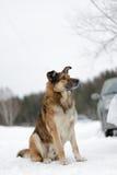 Big dog Royalty Free Stock Images