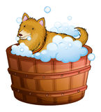 A big dog at the bathtub Royalty Free Stock Image