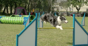 A big dog doing a long jump on the stick 4K FS700 Odyssey 7Q stock video