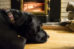 Dog in front of fireplace Royalty Free Stock Image