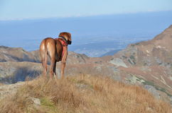 Big dog on the hill. At the sunshine Stock Images