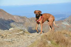 Big dog on the hill. At the sunshine Stock Photo