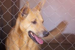 Big dog in iron cage. Big brown dog in iron cage in shelter Stock Photography