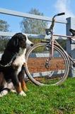 Big dog keep watch Stock Photos