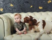 Big dog kisses  little boy on cheek. Big dog kisses baby boy  on cheek, on white sofa, studio Stock Photo