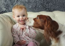 Big dog kisses little girl on cheek Royalty Free Stock Images