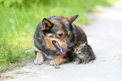 Big dog and the little kitten Royalty Free Stock Image