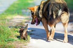 Big dog and little kitten Stock Photos