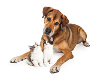 Big Dog Looking Down At Kittens Stock Images