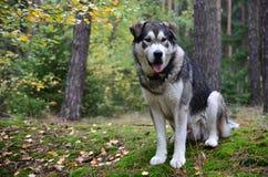 Big dog Stock Image
