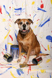 Big dog and paint cans Stock Photography