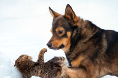 Big dog playing with kitten Royalty Free Stock Photo