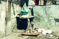 Big dog sits on chain Royalty Free Stock Photo