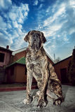 Big dog sitting outdors. And protects the house Stock Photo