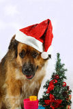 Big dog is waiting in snow for christmas Royalty Free Stock Photos