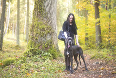 Big dog and a woman near the oak tree Royalty Free Stock Image
