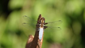 Big dragonfly on rusty underground royalty free stock images