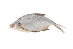 Big dried common bream Royalty Free Stock Images