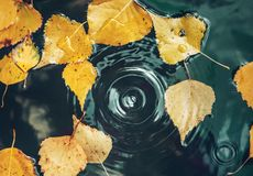 Free Big Drop Falling On Puddle Leaving A Radial Circles On Surface With Fallen Yellow Leaves On Water Stock Photos - 159970173