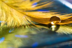 Free Big Drop On A Golden Bird`s Feather.Bird Feather On Blue Background. Selective Focus Royalty Free Stock Image - 103289916