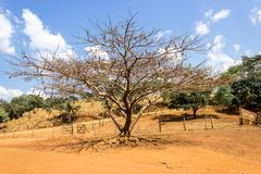 DryTree royalty free stock photography