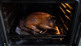 Big duck baked in the oven. A huge duck with a golden crust baked in the oven