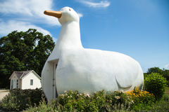 Big Duck Royalty Free Stock Image