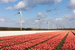 Big Dutch tulip field with wind turbines Stock Photo