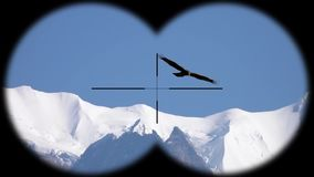 Big eagle bird flying over Himalayan mountain range seen through binoculars. Bird watching at wildlife safari. Shot with a Sony RX10 IV fps 59,94 FHD stock video