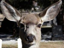 Big Ears Stock Photos