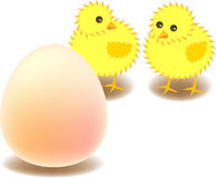 Big egg. Vector illustration for two chicks are curious for the big egg which is in front of them Royalty Free Stock Photography
