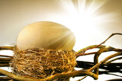 Big  egg in  bird's nest Stock Image