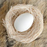 Big egg in small nest Stock Photo