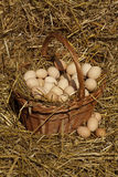 Big eggs Stock Photography