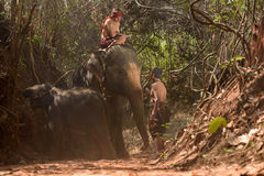 Big elephant and baby walking in the jungle Stock Photos