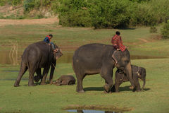 Big elephant and baby walking in the jungle Royalty Free Stock Image