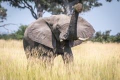 Big Elephant bull taking a dust bath. Royalty Free Stock Image