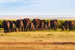 Big Elephant Herd. Big Elephant hern in the beautiful landscape of Amboseli National Park in Kenya stock photos