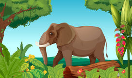 A big elephant in the jungle Stock Photography