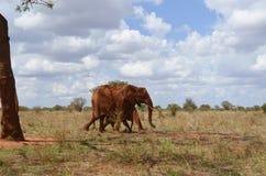 Big elephant , Kenya. Big elephant in the savannah of Africa, Kenya Stock Images