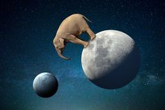 Big elephant on the Moon in the cosmos. Big elephant on the Moon surface in the cosmos vector illustration