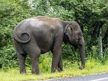 Big elephant near the main road Stock Photos